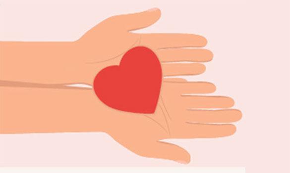 Cardiovascular homograft transplant (Transplant Tissue Centre